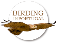 Birdinginportugal